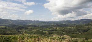 ブラジル サンタアリーナ農園