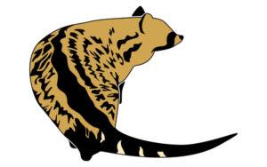 麝香猫イメージ