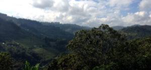 コロンビア サンアグスティン