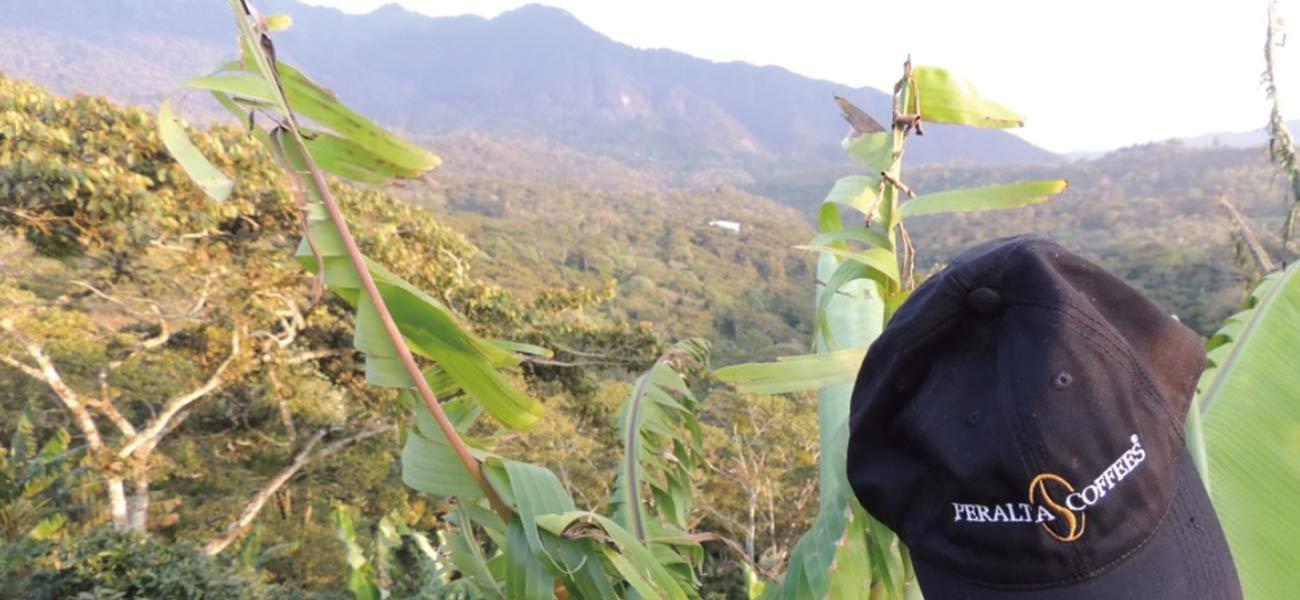 スペシャルティ珈琲豆 ニカラグア ラス・ゴロンドリナス農園